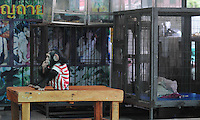 Several monkey's and a tigers are caged and chained all day used to raise money from tourists for taking photographs in an animal photo studio in Bangkok Thailand. The youngest monkeys (have names) are are 2.5 and 1.5 years and remain permanently separated from their mother. The studio which is a sideshow in a crocodile farm charge 200 Thai Bhat (about 4.20 pounds) picture.