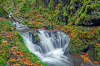ORCG_D196 - USA, Oregon, Columbia River Gorge National Scenic Area, Emerald Falls on Gorton Creek in autumn with fallen leaves and lush vegetation.