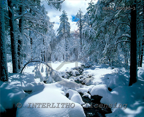 Tom Mackie, CHRISTMAS LANDSCAPE, photos, Snow-Covered Pine Trees & Stream, Flagstaff, Arizona, USA, GBTM980590-1,#XL# Landschaften, Weihnachten, paisajes, Navidad