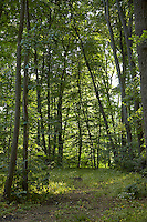 FOREST_LOCATION_90102