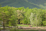 Horses in Cades Cove, Great Smoky Mountains National Park, TN, USA