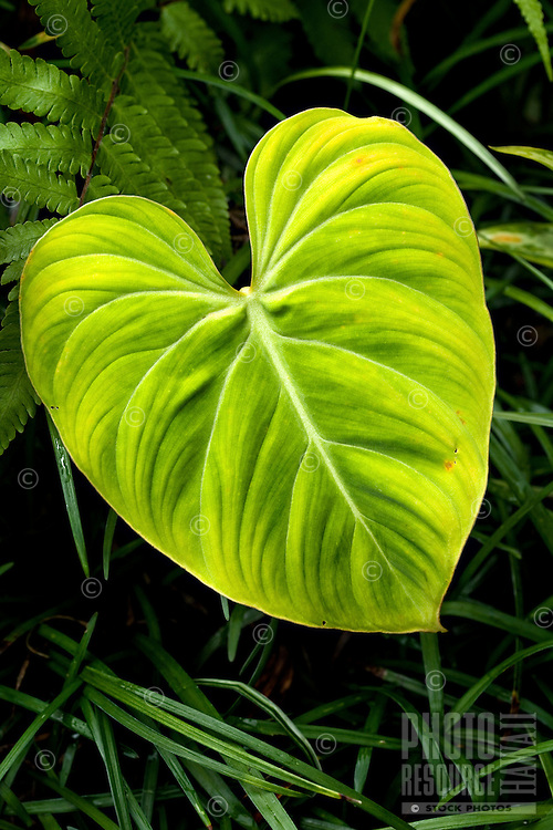 Close-up of heart-shaped leaf