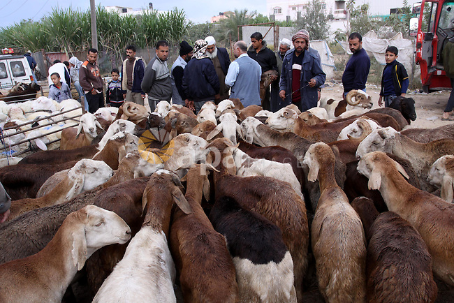 "A Palestinian vendor shows his livestock to buyers at market in Gaza city, on November 04, 2011 ahead of the Muslim Eid al-Adha festival at the end of the week. Muslims across the world are preparing to celebrate the annual ""Festival of Sacrifice"", which marks the end of the Hajj pilgrimage to Mecca and in commemoration of Prophet Abraham's readiness to sacrifice his son to show obedience to God. Photo by Mohammed Asad"