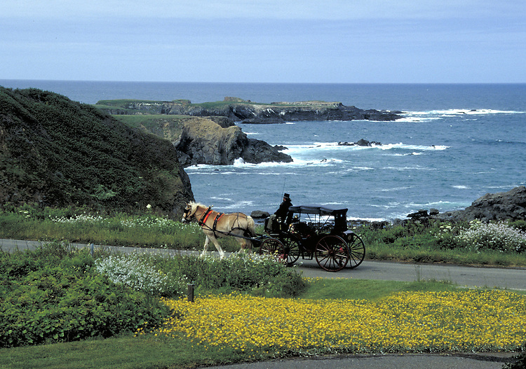 Horse and carriage on Mendocino Headlands drive