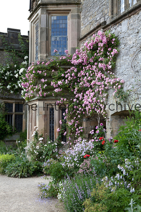 Rambling roses climbing over the facade of Haddon Hall