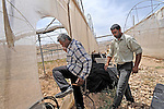 Jasser Dararmeh, right, and Faik Sabih, left, enter one of their greenhouses, which are dry due to lack of water, in the village of Farsiya, northern Jordan Valley, West Bank.