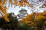 View of Osaka Castle, Osakajo through yellow autumn tree branches on a misty morning. Osaka Castle Park in fall, Chūō-ku ward, Osaka city, Japan 2017