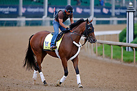 LOUISVILLE, KENTUCKY - APRIL 30: Irap, owned by Reddam Racing LLC and trained by Doug O'Neill, exercises in preparation for the Kentucky Derby at Churchill Downs on April 30, 2017 in Louisville, Kentucky. (Photo by Jon Durr/Eclipse Sportswire/Getty Images)