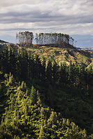 Forest landscape, Gisborne Region, North Island, New Zealand