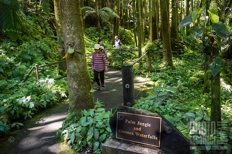 Tourists stroll through the palm jungle near the Onomea waterfalls at the Hawaii Tropical Botanical Garden, Papa'ikou, Big Island of Hawaiʻi.