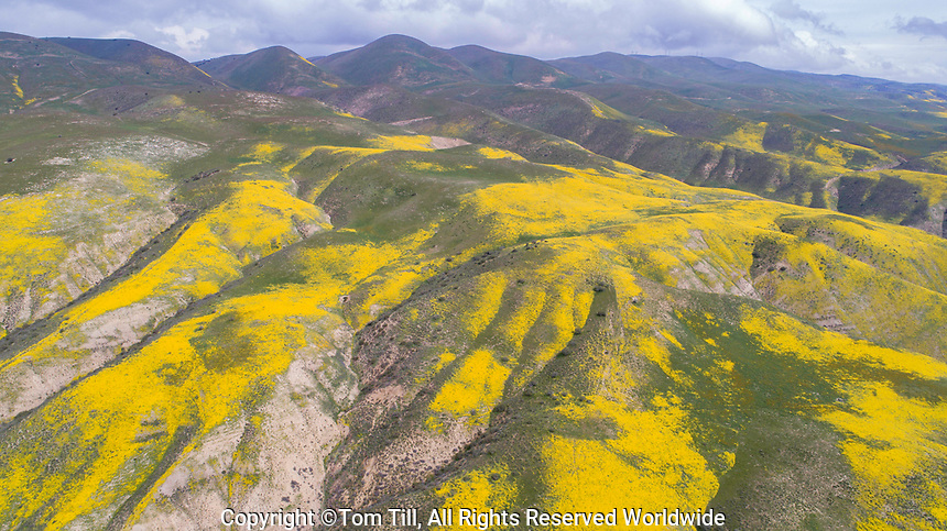 Wildflower blooms in the Temblor Range, Carrizo Plain National Monument, California, Aerial view