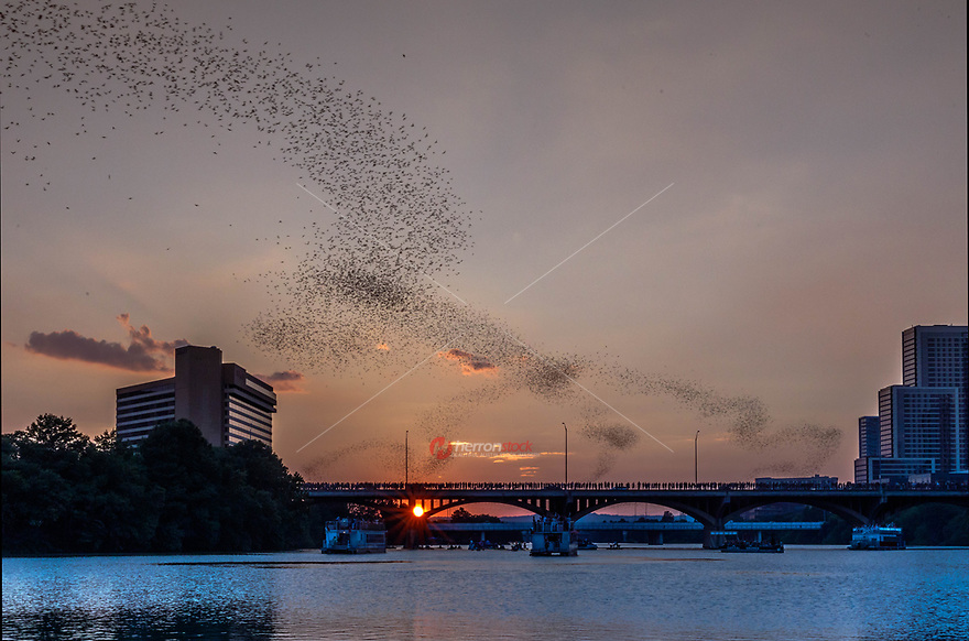 A Little History. Every summer night, hundreds of people gather to see the world's largest urban bat colony emerge from under the Congress Avenue Bridge in downtown Austin, Texas. These 1.5 million bats are fun to watch, but they're also making our world a better place to live.