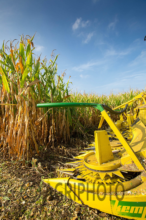 Harvesting Maize for use as dairy cattle feed in South Lincolnshire<br /> Picture Tim Scrivener 07850 303986