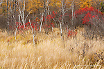 Winterberry, autumn grasses