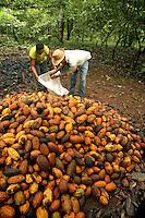 """Agricultor Milton Pereira Ramos, paranaense, 40 anos,  e Valdemar Lira de Souza, 36 anos, trabalham com a produÁ""""o de cacau na transamazÙnica, <br /> Anap˙ , Par· , Brasil<br /> Foto Paulo Santos/Interfoto<br /> 168/02/2005"""