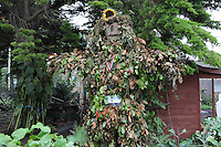 Scarecrow built with the help of the Allotment Garden volunteers in Regent's Park, London, UK. The scarecrow was covered in evergreens by visitors of the Harvest Festival on September 23rd, 2012. Picture by Manuel Cohen