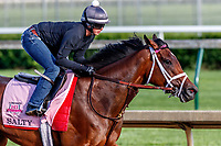 LOUISVILLE, KENTUCKY - MAY 01: Salty, owned by Gary Barber, Beccari Racing Stable LLC, and Chester Prince and trained by Mark E. Casse, exercises in preparation for the Kentucky Oaks at Churchill Downs on May 1, 2017 in Louisville, Kentucky. (Photo by Jesse Caris/Eclipse Sportswire/Getty Images)