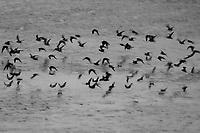 Birds in Flight-Film