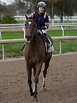 Feb 2011:  Demarcation and Anna Napravnik (2) after winning the Mineshaft handicap at the Fairgrounds in New Orleans, Louisiana.