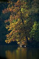 DEU, Deutschland, Bayern, Niederbayern, Naturpark Bayerischer Wald, bei Tittling: Dreiburgensee (Rothausee), Erolungsgebiet, Badesee | DEU, Germany, Bavaria, Lower-Bavaria, Nature Park Bavarian Forest, near Tittling: Dreiburgen Lake