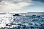 People watching humpback whale from a boat in the ocean near Vancouver Island, BC, Canada 2017