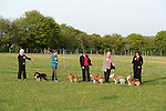 Line of single breed dogs in ring with smartly dressed owners all wearing ring cards, Sheltie Dogs