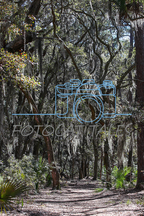 The Skidaway State Park in Savannah, Ga., on Tuesday, March 10, 2015.<br /> Photo by Cathleen Allison