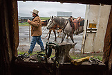 USA, Oregon, Enterprise, Cowboy Todd Nash unsaddles his horses at the Snyder Ranch after a long day of moving cattle in the rain, Northeast Oregon