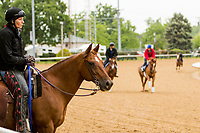 LOUISVILLE,KNY - MAY 04:  Morning works  at Churchill Downs, Louisville, Kentucky. (Photo by Sue Kawczynski/Eclipse Sportswire/Getty Images)