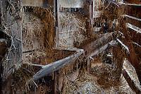 Livestock feeding trough in old barn.