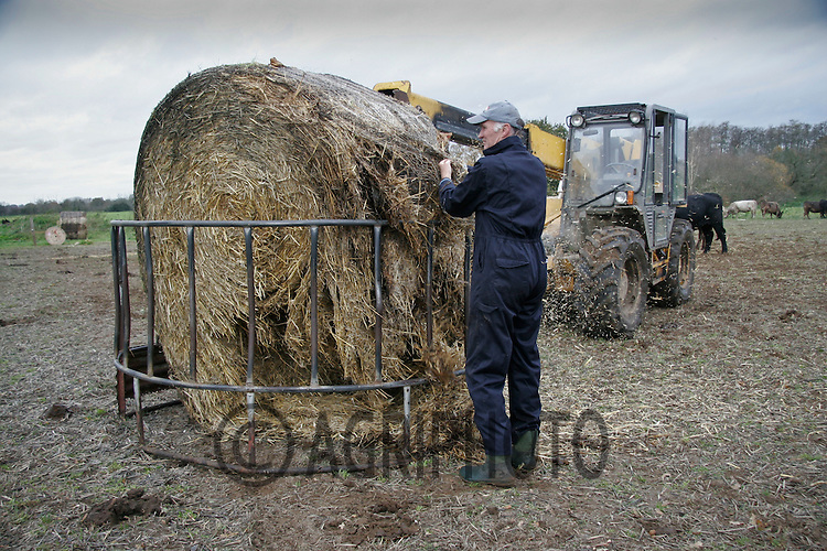 A Farmer Cutting The Wrapping From A Round  Bale Of Silage That is Placed In A Ring Feeder.