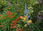 Vashon-Maury Island, WA  A small weathered church is tucked in a perennial garden with blooming crocosmia and lysimachia
