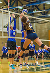1 November 2015: Yeshiva University Maccabee Setter, Defensive Specialist, and team co-Captain Aliza Muller, a Senior from Los Angeles, CA, jumps to block against the Saint Joseph College Bears at SUNY Old Westbury in Old Westbury, NY. The Bears shut out the Maccabees 3-0 in NCAA women's volleyball, Skyline Conference play. Mandatory Credit: Ed Wolfstein Photo *** RAW (NEF) Image File Available ***