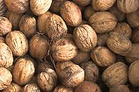 Walnuss, Walnuß, Wal-Nuss, Wal-Nuß, Reife Früchte, Nüsse, Ernte, Juglans regia, Walnut, Noyer commun