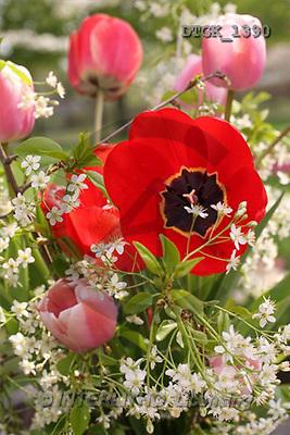 Gisela, FLOWERS, photos(DTGK1390,#F#) Blumen, flores, retrato