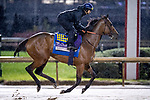 November 1, 2018: Marley's Freedom, trained by Bob Baffert, exercises in preparation for the Breeders' Cup Filly & Mare Sprint at Churchill Downs on November 1, 2018 in Louisville, Kentucky. Alex Evers/Eclipse Sportswire/CSM