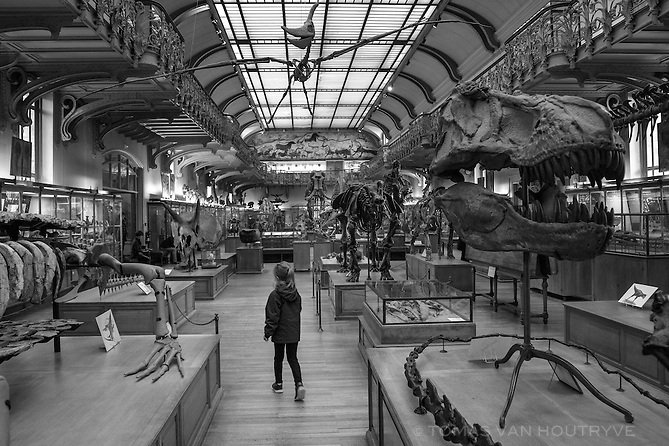 A girl walks between skeletons at the Paleontology museum inside the Jardin des Plantes in Paris, France, five days after coordinated terrorist attacks struck the heart of the French capital. Museums around the city have reopened.