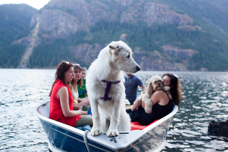 A dog checks out the beach from a boat ride on Ross Lake, WA, USA.