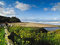 Spring at San Gregorio State Park south of Half Moon Bay, California