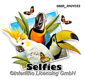 Howard, SELFIES, paintings+++++selfie parrots,GBHRPROV185,#Selfies#, EVERYDAY