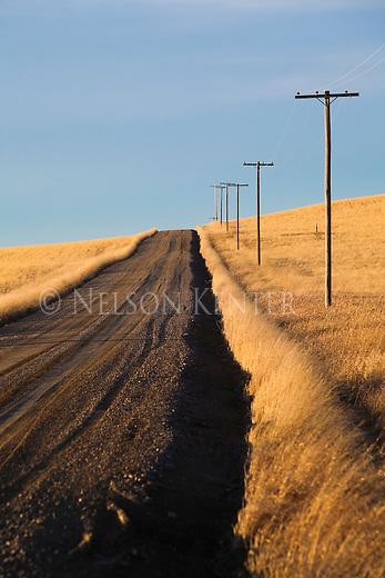 A rural road through wheat fields in eastern Montana