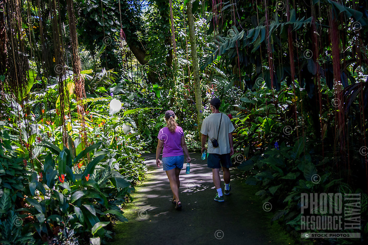 Tourists walk through the rain forest at Hawaii Tropical Botanical Garden, Papa'ikou, Big Island of Hawaiʻi.