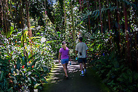 Tourists walk through the rain forest at Hawai'i Tropical Botanical Garden, Onomea, Big Island of Hawaiʻi.
