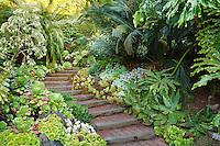 Stairs, steps going up walkway into California tropical foliage garden with succulents