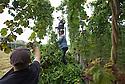 2014_09_05_hop_harvest