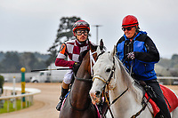 HOT SPRINGS, AR - APRIL 13:  Apple Blossom Handicap at Oaklawn Park on April 13, 2018 in Hot Springs,Arkansas.  #7 Farrell with jockey Channing Hill. (Photo by Ted McClenning/Eclipse Sportswire/Getty Images)