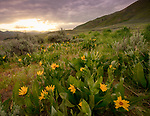 Idaho, Southwestern, Boise, May, Prairie. Sunrise in the the Danskin Mountains in spring.