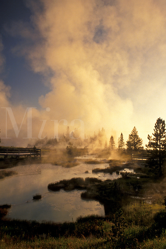 Yellowstone National Park, WY, Wyoming, Steam rising from the hot springs at West Thumb Geyser Basin at sunrise in Yellowstone Nat'l Park in Wyoming.