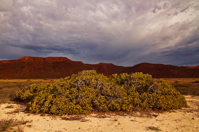 Bush in foreground with clouds