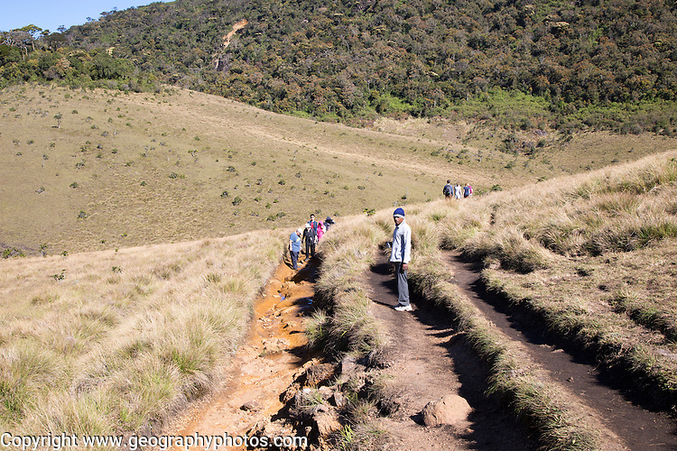 Walkers in Horton Plains national park montane grassland environment, Sri Lanka, Asia showing human erosion of footpath